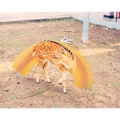 Sunny Deer-From the series A Myth of Two Souls