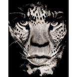 【アルバート・ワトソン額装付作品プリント】Mick Jagger, Los Angeles 1992