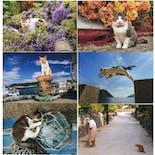 岩合光昭 いよねこ 猫と旅する写真展|島の猫ポストカード10枚セット